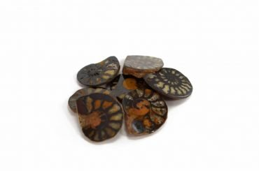 Crystal Dreams Ammonite Fossil. Come Get Your Own Here.