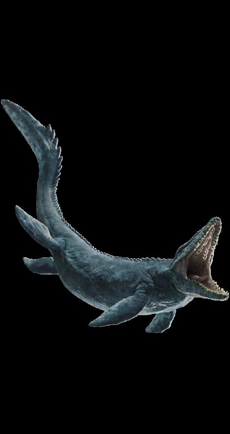 Mosasaurus Tooth