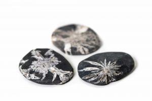 Chrysanthemum Palm Stone 1