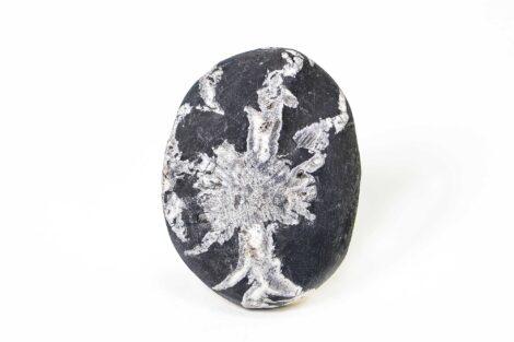 Chrysanthemum Palm Stone 2