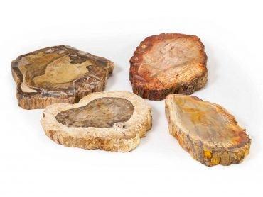 Petrified Wood Slice - Crystal Dreams
