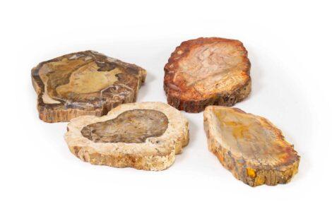Petrified Wood Slice (hand) - Crystal Dreams