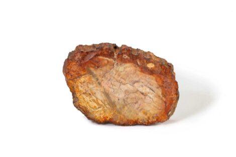 Trilobite fossil (Copy) 2
