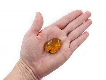 Amber with fossil insect polished gem - Crystal Dreams