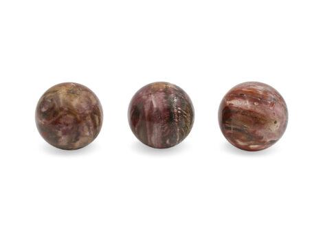 Petrified Wood Sphere - Crystal Dreams