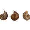 Ammonite Sterling Silver Pendant